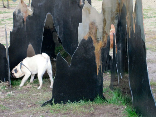 Dogs walk through sculpture, Socrates Sculpture Park