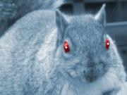 Shack Shack greedy squirrel illustration